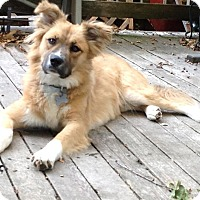 Border Collie Mix Dog for adoption in Memphis, Tennessee - Comfort