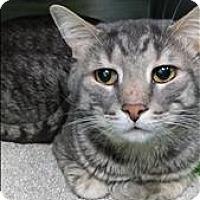 Adopt A Pet :: Benny - Abbotsford, BC