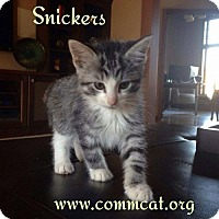 Adopt A Pet :: Snickers - Whitewater, WI