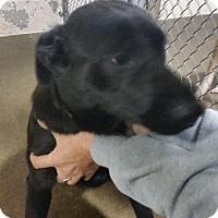 Adopt A Pet :: Josie - Sparta, NJ
