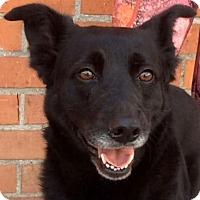 Adopt A Pet :: ESME (video) - Los Angeles, CA