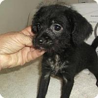 Adopt A Pet :: Heckle - Bonifay, FL