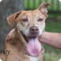 Adopt A Pet :: Clover - Middleburg, FL