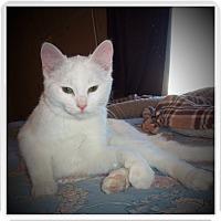 Adopt A Pet :: LEXA - Medford, WI
