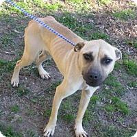 Adopt A Pet :: Kendall - Rocky Mount, NC