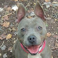 Adopt A Pet :: Tara - Walden, NY