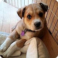 Adopt A Pet :: Bean - Littleton, CO