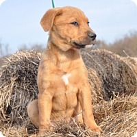 Adopt A Pet :: Lady - Forrest City, AR