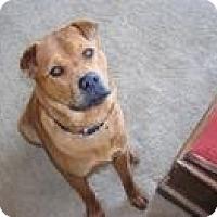 Adopt A Pet :: Bruno - Marina del Rey, CA