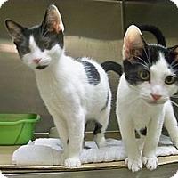 Adopt A Pet :: Aspen - Secaucus, NJ
