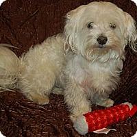 Adopt A Pet :: Marty - Hazard, KY