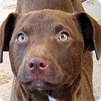 Adopt A Pet :: Baby Coco - Oakley, CA