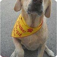 Adopt A Pet :: Caesar - Altmonte Springs, FL