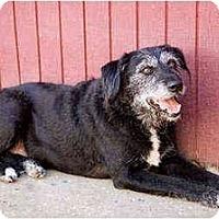 Adopt A Pet :: Dakota - Portland, OR