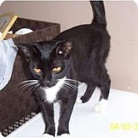 Adopt A Pet :: Magic - Saint Albans, WV