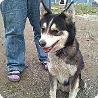 Adopt A Pet :: Zeke - Seattle, WA