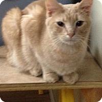Adopt A Pet :: Bear - Monroe, GA