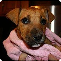 Adopt A Pet :: Pluto - Reisterstown, MD