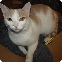 Adopt A Pet :: Crystal - Mesa, AZ