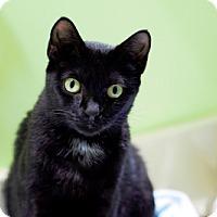 Adopt A Pet :: Egypt - Alexandria, VA