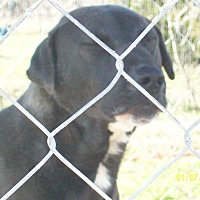 Adopt A Pet :: Wyatt - Mexia, TX