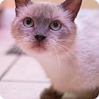 Adopt A Pet :: Chynna - Merrifield, VA