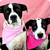 Adopt A Pet :: Ashlee & Alice - Forked River, NJ