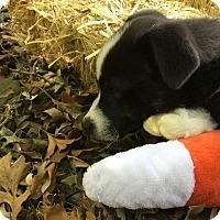 Adopt A Pet :: Wyatt - Midwest (WI, IL, MN), WI