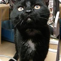 Adopt A Pet :: Isabelle - Covington, KY