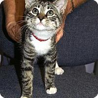 Adopt A Pet :: Jasmine 2 - Englewood, FL