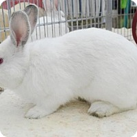 Adopt A Pet :: *BLAZE - Sacramento, CA