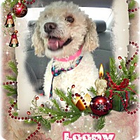 Adopt A Pet :: Loopy - Encino, CA