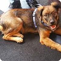 Adopt A Pet :: Jasper - Nashville, TN