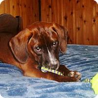 Adopt A Pet :: Sam A - Grafton, WI