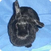 Adopt A Pet :: Tabitha - Woburn, MA