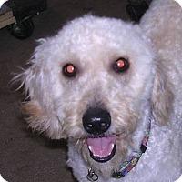Adopt A Pet :: Trent - Yucaipa, CA