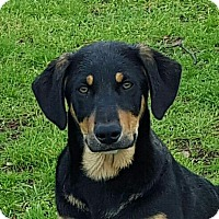 Adopt A Pet :: Zena - Buffalo, NY