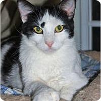 Adopt A Pet :: MILO - Encino, CA