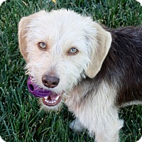 Adopt A Pet :: Mitchell - 24 lbs! - Los Angeles, CA