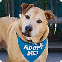 Adopt A Pet :: Tanner - Pacific Grove, CA