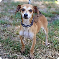 Adopt A Pet :: McEvers - San Diego, CA