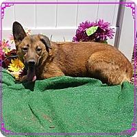 Adopt A Pet :: molly - Shelter Island, NY