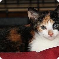 Adopt A Pet :: Becky - Berkeley Hts, NJ