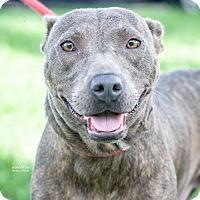 Adopt A Pet :: Babs - Gainesville, FL