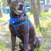 Adopt A Pet :: Asa - Castro Valley, CA