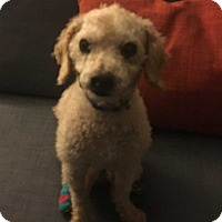 Adopt A Pet :: Charlie Brown - Mooresville, NC
