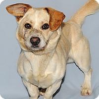 Dogs For Adoption In Aylmer Quebec