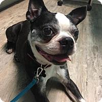 Adopt A Pet :: Bobo - High Point, NC