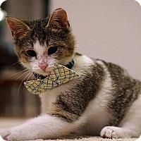 Adopt A Pet :: Rudolph (Rudy) - Durham, NC