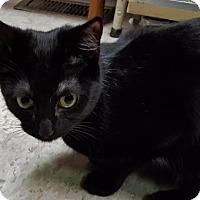Adopt A Pet :: Moxie - Lancaster, PA